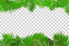 Summer jungle palm leaf frame vector illustration