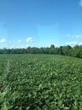 Summer in Kentucky. Kentucky farm town Stock Photo