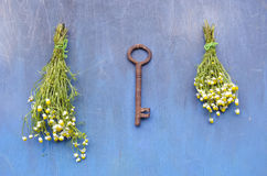 Summer key for healthy life - chamomile flower on wall Royalty Free Stock Image