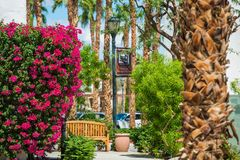 Summer in La Quinta, CA. Lifornia, United States. Flowers and Palms in La Quinta Downtown Area royalty free stock photo