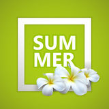 Summer label with exotic frangipani flowers Royalty Free Stock Photo