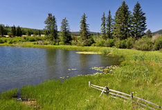 Summer lake. Lake on edge of meadow with trees and blue sky in background Stock Photo