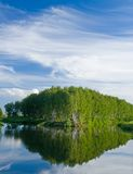 Summer lake. Summer landscape - lake and forest Stock Images