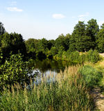 Summer. Lake in the forest Royalty Free Stock Images