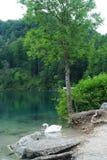 Summer. Lake Royalty Free Stock Photos