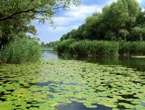 Summer lake with green lilies. Under a blue sky Stock Photos