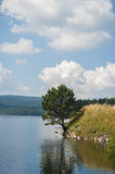 Summer lake near the forest. Stock Photos