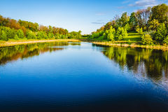 Summer lake near the forest. Royalty Free Stock Photos