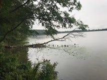 Summer at lake. Stock Photos
