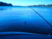 Summer lake rod fishing Rudd fish Royalty Free Stock Photos