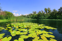 Summer on lake Stock Image