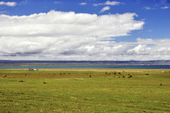 Summer Lake scenery. Qinghai Lake,which is one of the most beautiful lakes in China, is shining in the sun Stock Images