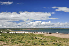 Summer Lake scenery. Qinghai Lake,which is one of the most beautiful lakes in China, is shining in the sun Royalty Free Stock Image
