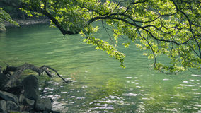 Summer lake waters Royalty Free Stock Images