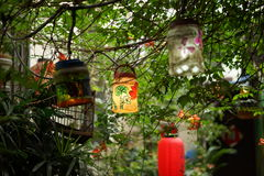Summer lamp. Summer has arived.these chinese summer lamps are showing that royalty free stock photography