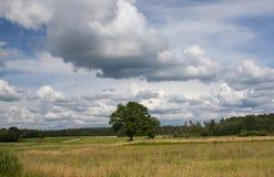 Summer land sky horizon Royalty Free Stock Photo