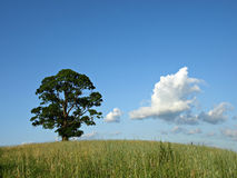 Summer landscape. Tree in a field against blue sky Stock Photography