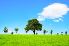 Summer Landscape. Green field,blue sky and trees Stock Photography