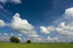 Summer landscape. Green field of oats and dark blue sky Stock Photo