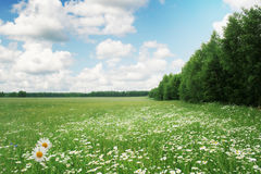 Summer landscape. Royalty Free Stock Photography