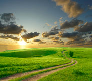 Summer landscape. With green grass, road and clouds Stock Photography
