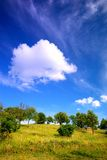 Summer landscape. Meadow and trees under the cloudy blue sky Royalty Free Stock Photography