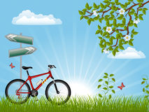 Summer landscape. With a bike. Vector illustration Stock Photos