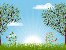 Summer landscape. With an olive trees. Vector illustration Stock Images