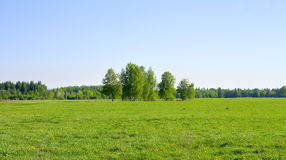 Summer landscape Royalty Free Stock Image