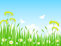 Summer Landscape. Nature Landscape. Green meadow with flowers and butterflies Stock Image