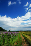 Summer landscape. Rural path and a field of summer flowers under a blue sky stock photo