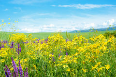 Summer landscape. Landscape with wild flowers and blue sky Royalty Free Stock Image