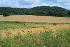 Summer landscape (2). Landscape with oats field, forest, hills and meadow Stock Image