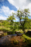 Summer landscape. Beautiful landscape in Yorkshire Dales National Park in England Royalty Free Stock Photos