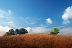 Summer landscape. Meadow, trees and sky with clouds royalty free stock images