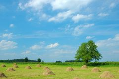 Summer Landscape Royalty Free Stock Photos