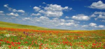 Summer landscape. Early summer fields in west Romania, wonderful intense colors Stock Photo