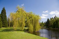Summer Landscape. Trees in the park, on a bright summers day stock images