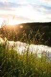 Summer landscape. Near small river stock image