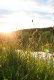 Summer landscape. With nice meadow Stock Image
