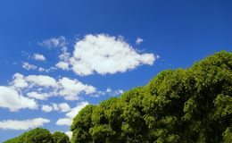 Summer landscape. Picture of a beautiful Summer landscape Royalty Free Stock Photography