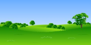 Summer landscape. With trees and flowers vector illustration