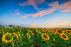 Summer landscape Stock Image
