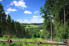 Summer landscape. View through the forest on summer green grassland with sky Stock Photography