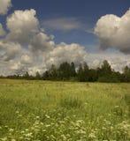 Summer landscape. Stock Photos