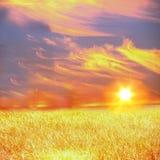 Summer landscape. Solar orange evening summer landscape Stock Images