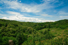 Summer landscape. With a green forest under a deep blu sky Stock Photo