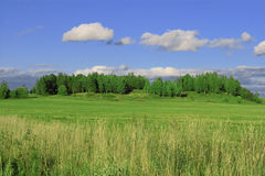 Summer landscape. With green forest and blue sky Stock Photo