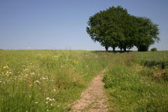 Summer landscape. With trees Stock Image
