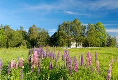 Summer Landscape. A landscape picture of a mansion house in a tree grove and lupins in the forground. With sky polarisation Stock Photos